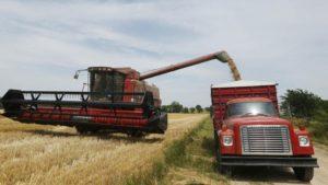 Trigo: cómo hizo Rusia para pasar de principal importador a primer exportador mundial